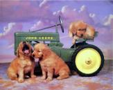 Dogs on tractor