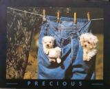 Denim Dogs