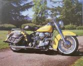 Yellow Harley Davidson