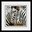 Zebra Close Up Arcobaleno