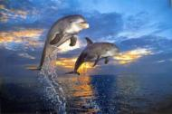 Flight of Two Dolphins