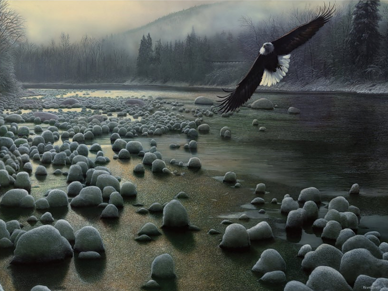 Eagle Over Water Kevin Daniel