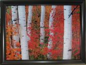 Aspens and Maples Elizabeth Carmel