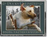 Ducks Unlimited - Banding Together