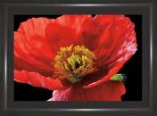 Red Poppy Amalia Veralli